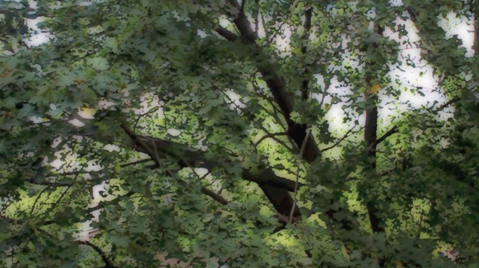 FAQs on Boundary Trees   Boundary Trees